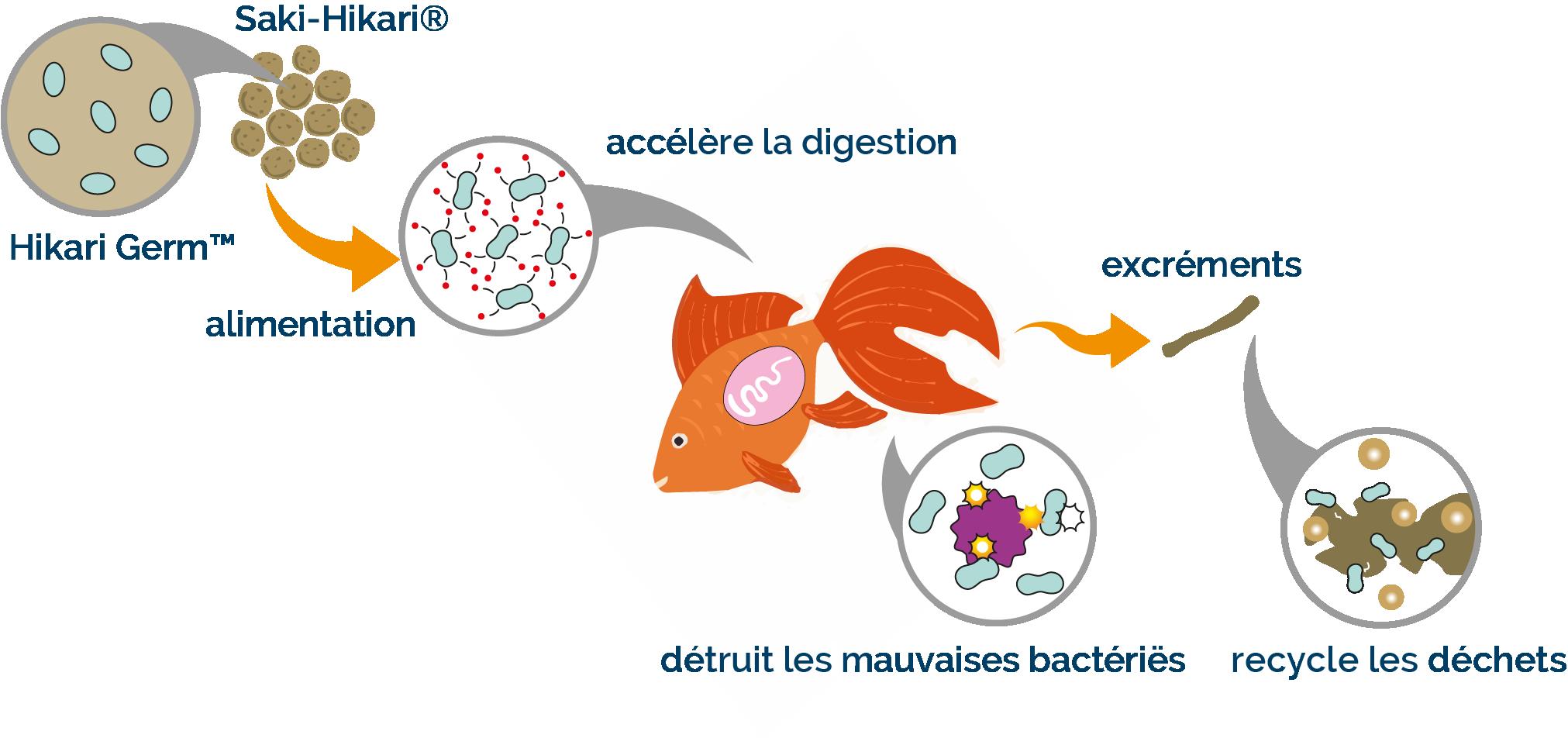 "Afbeeldingsresultaat voor hikari accélère la digestion fr koi"""